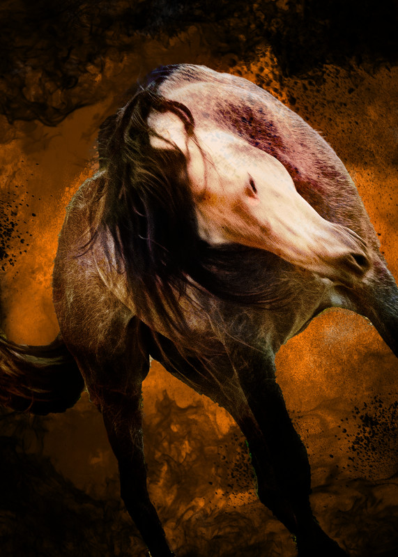 Equine Inferno 2 A Photography Art | Images2Impact