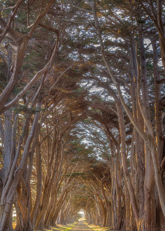 Cypress Sunrise Art | The Carmel Gallery