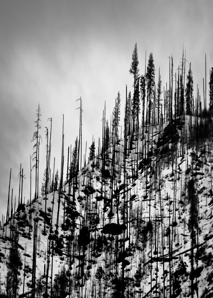 Wenatchee National Forest #2 Art | James Alfred Friesen