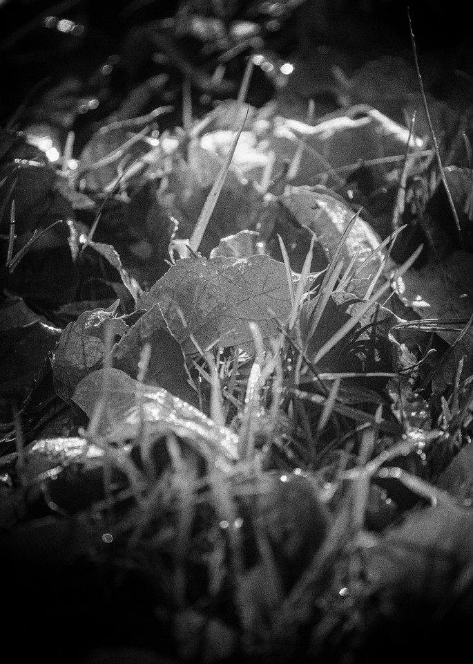 Leaves  16 Photography Art | Sandy Adams Outdoorvizions Photography