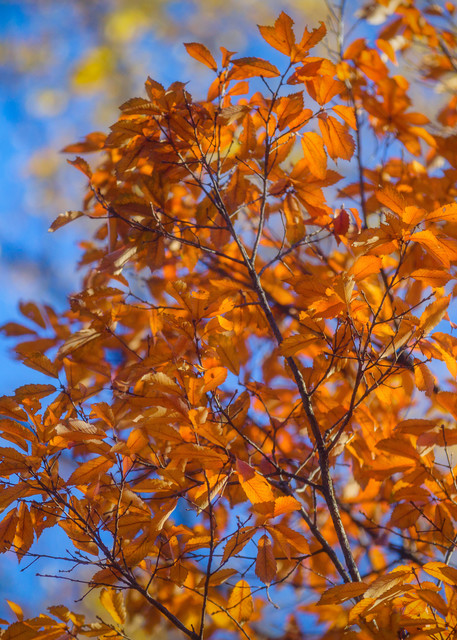 Leaves  65 Photography Art | Sandy Adams Outdoorvizions Photography