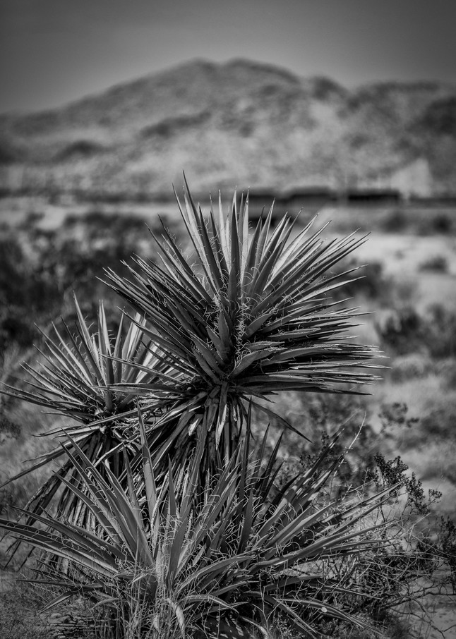 Mountains  8 Photography Art | Sandy Adams Outdoorvizions Photography