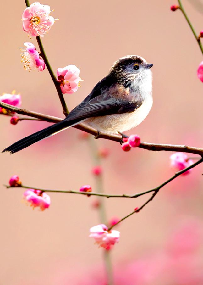 Garden Birds 02 Photography Art | Cheng Yan Studio