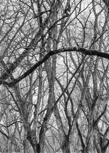 Trees  49 Photography Art | Sandy Adams Outdoorvizions Photography