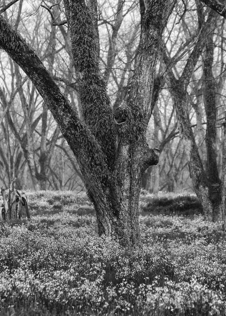 Trees  50 Photography Art | Sandy Adams Outdoorvizions Photography