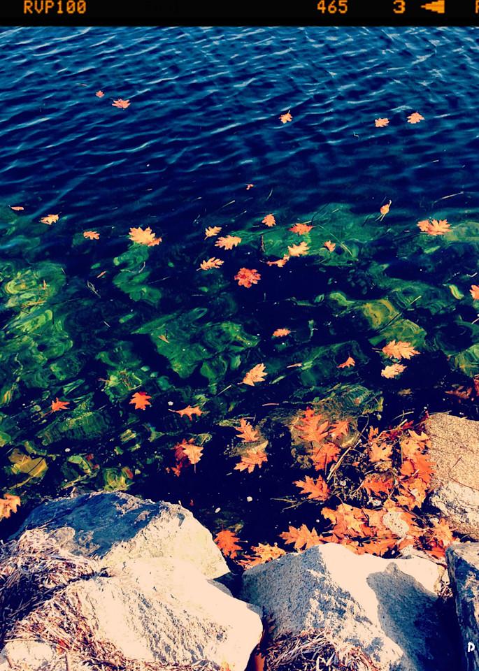 Tidal Pond Wonder Instagram Print