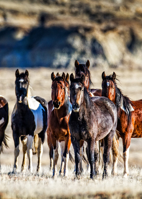 Wild Horse Eyes On You Art | Third Shutter from the Sun Photography