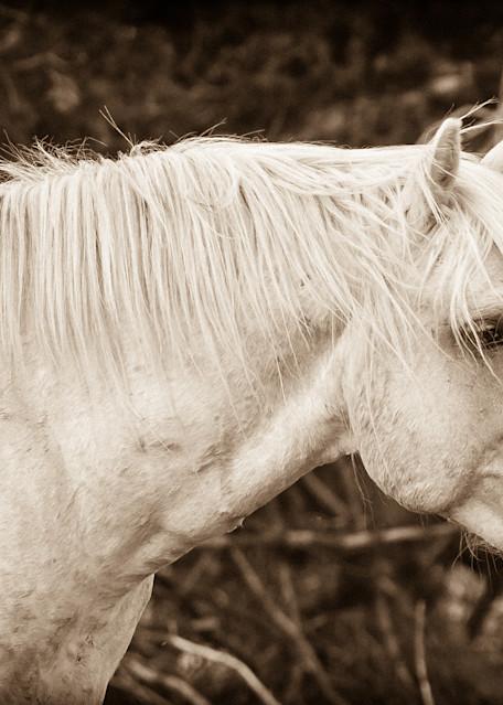 Watchful Cloud   Wild Stallion Art | Third Shutter from the Sun Photography