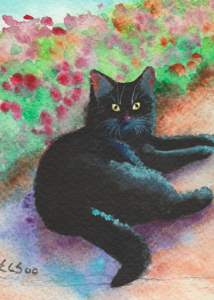 Black Kitty Cat Resting In The Garden