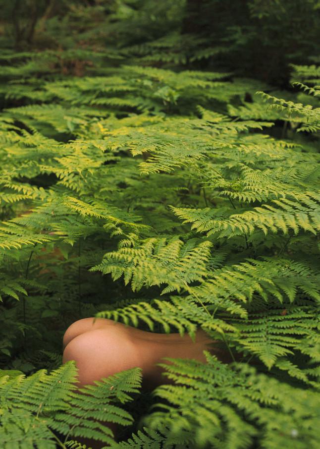 Behind the Ferns