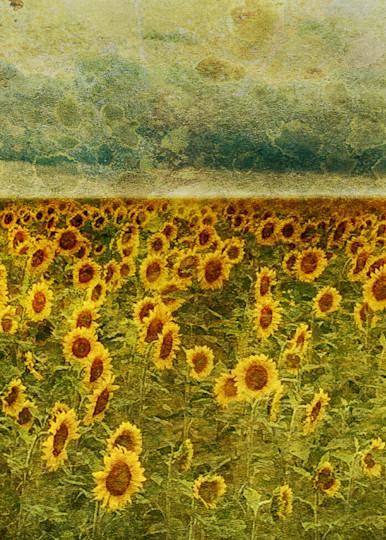 Geoscape Sunflower Field Art | FortMort Fine Art