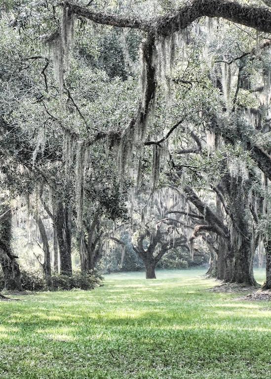 Fine Art Photog The Plantation Art | FortMort Fine Art