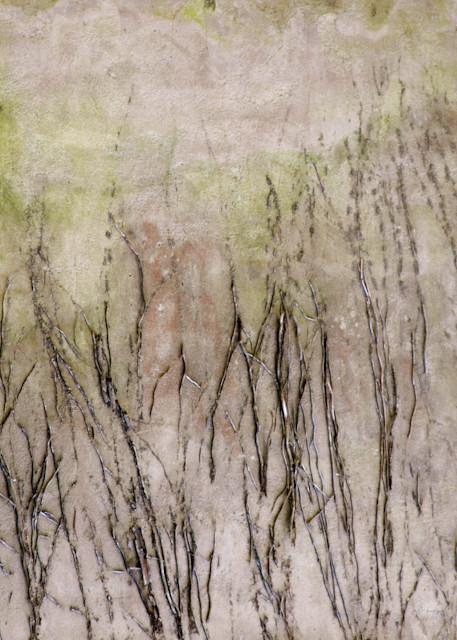 Fine Art Photog Twigs Art | FortMort Fine Art