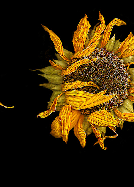 Flowers Aging Gracefully Art | FortMort Fine Art