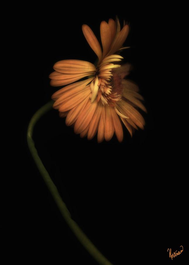 Flowers Butterfly Art | FortMort Fine Art