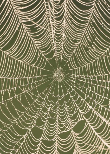Spider Web & Dew Drops, Damon, Texas