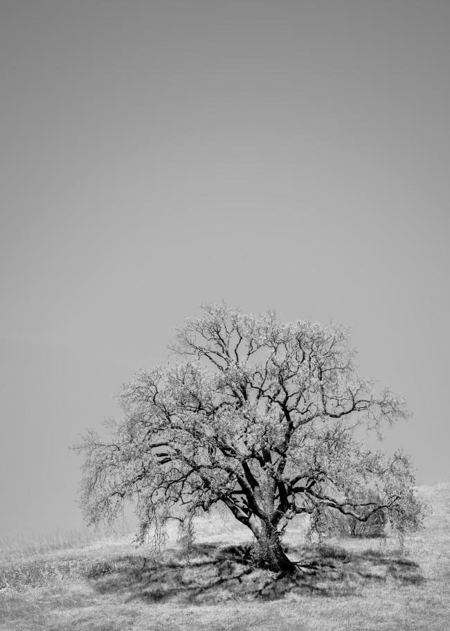 Single Oak Photography Art | MJW Fine Art