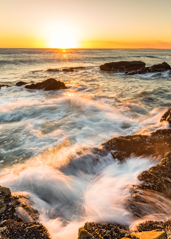 California Gold Photography Art | MJW Fine Art