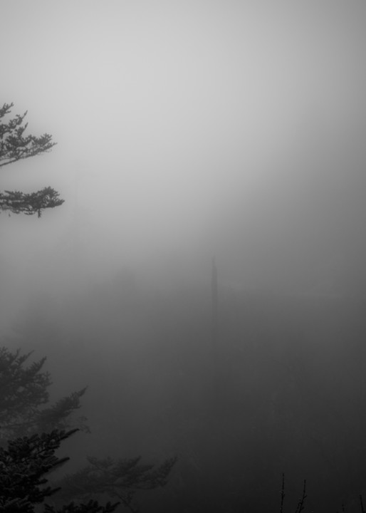 Bhutan Lone Fog Tree | Black and White Landscape Photography