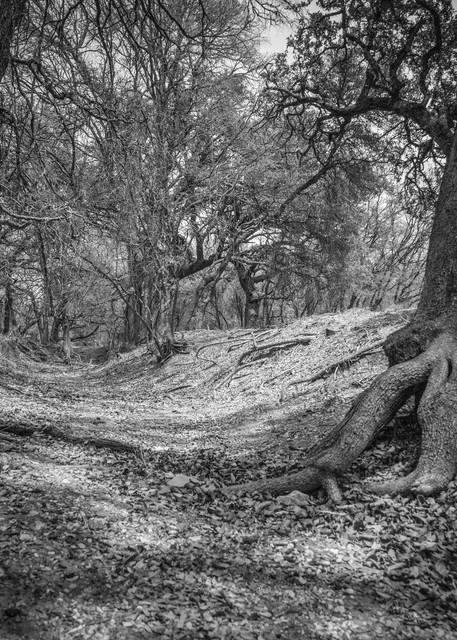 Full Moon Forrest | Black and White Landscape Photography