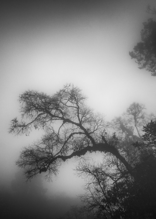 Bhutan Leaning Tree | Black and White Landscape Photography