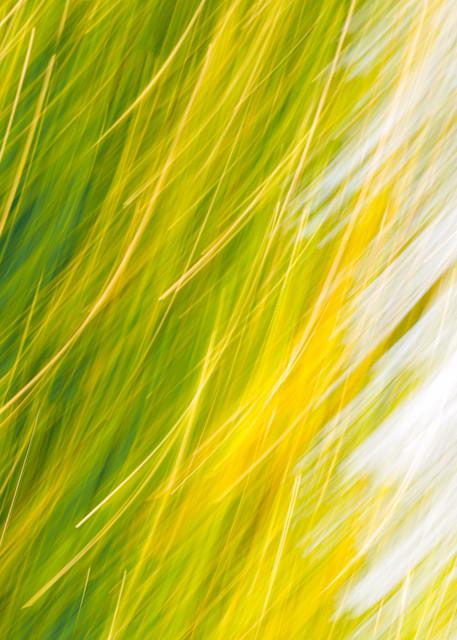 Poplar Light Photography Art | allysonmagda