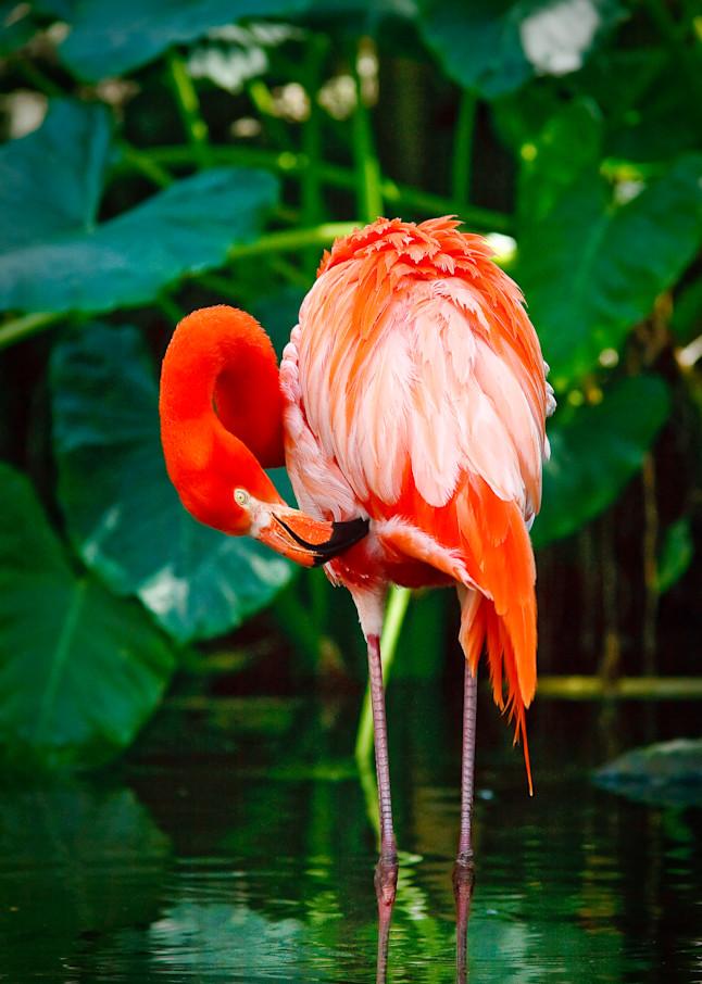 Flamingo - No.2