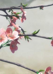 Apple Blossom | Cynthia Decker