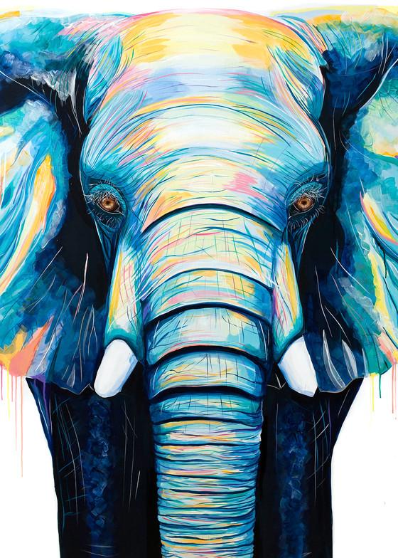 Colorful Elephant Print
