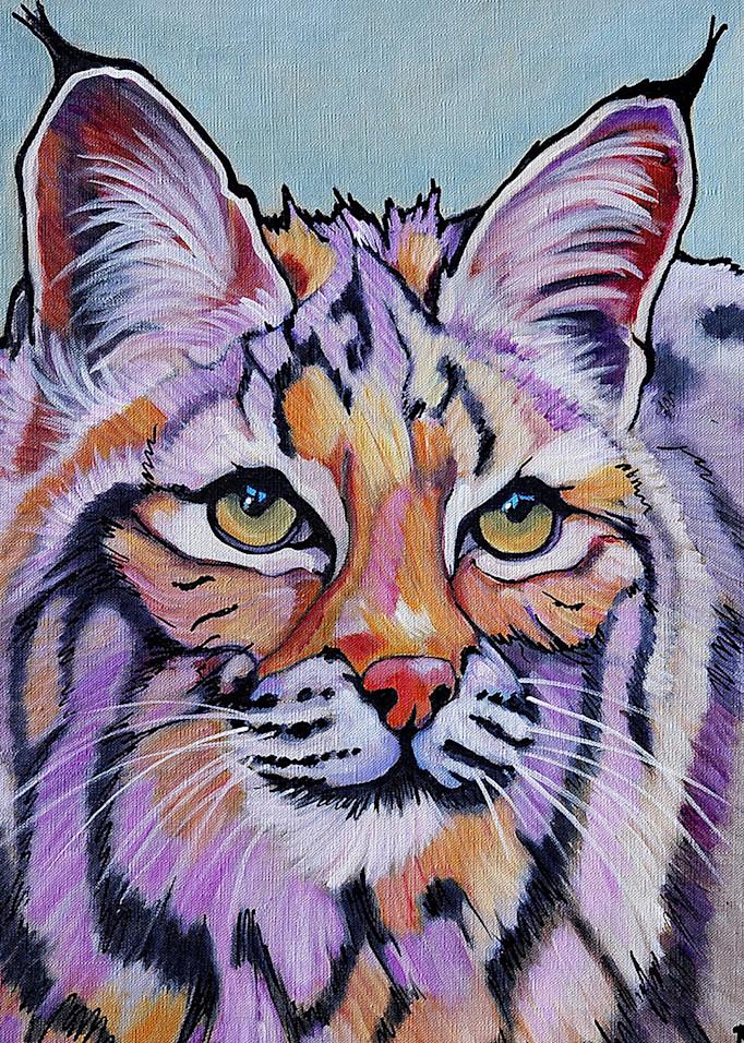 "Lynx ""Pretty Boy"" Rufus Art   rosecollinsartist"