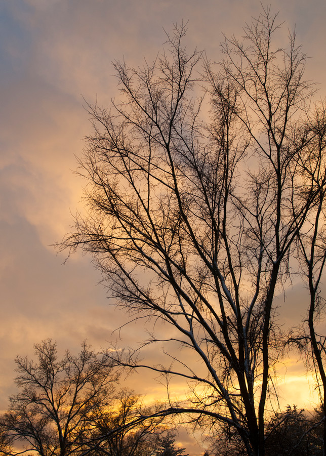 Lauree Feldman Winter Sky New Paltz