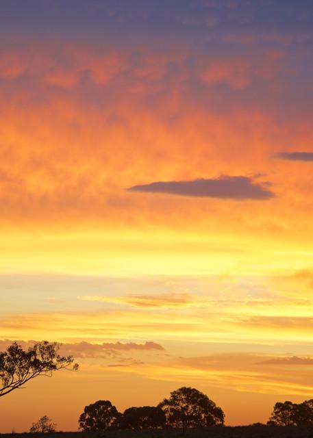 Golden Sentinel - Maitland Hunter Valley NSW Australia   Sunset