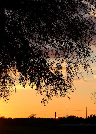 Beautiful Texas Sunset Behind Tree