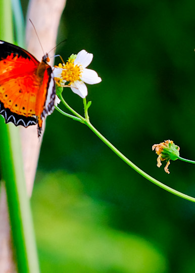 Flowers and Butterflies-64