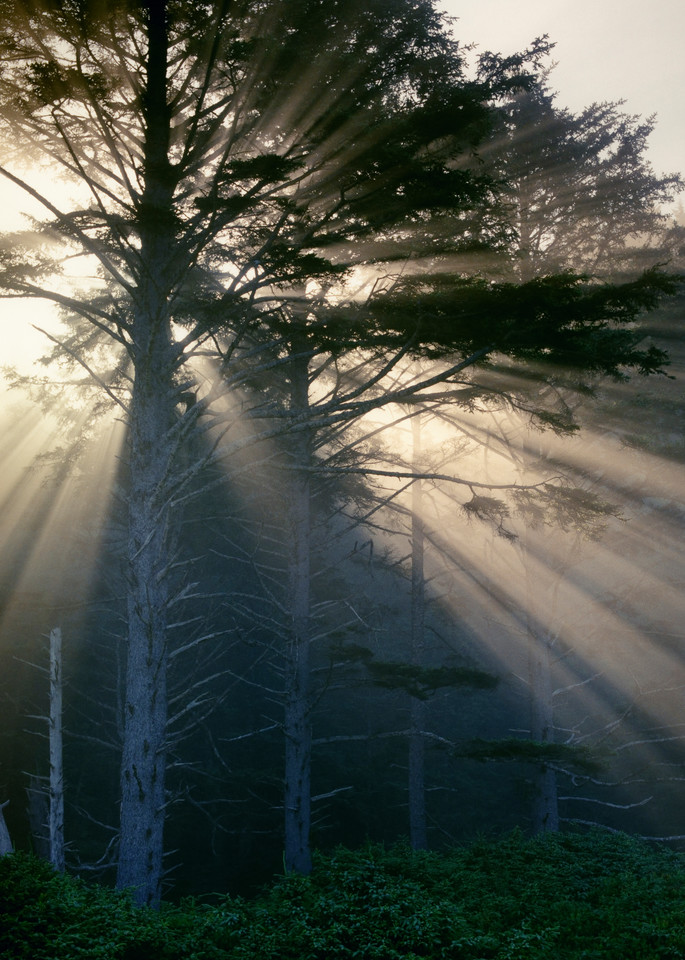 Illumination Photography Art | Mark Bergsma Photographic Artist