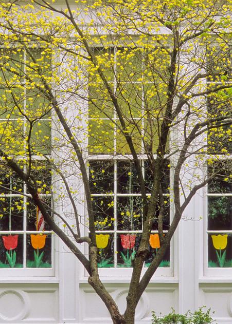 Spring Windows