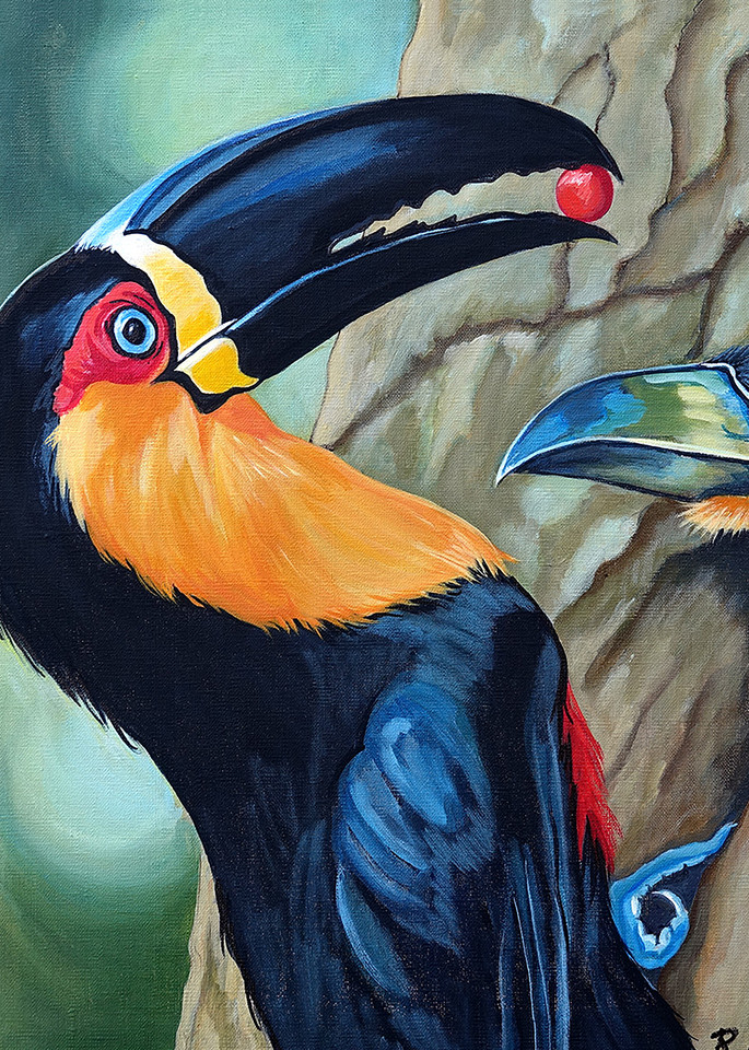 Keel-Billed Toucan Feeding Chick