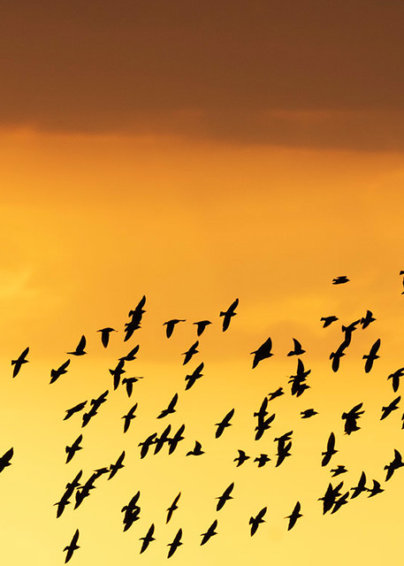 Constance Mier Photography - fine art birds