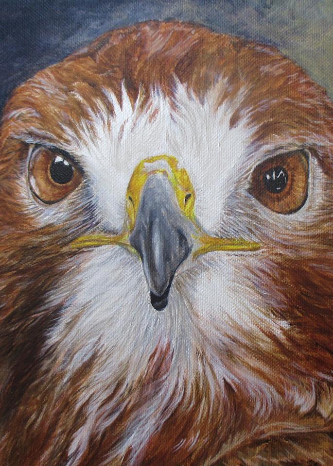Portrait Of A Red Tail Art   Lori Vogel Studio