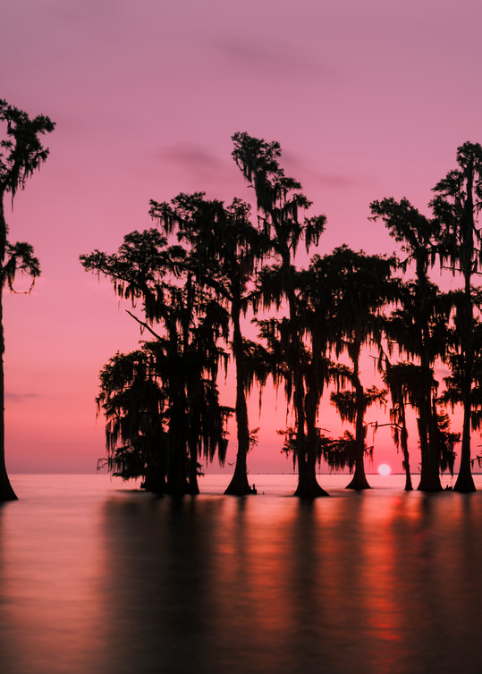 Morning in the Swamp - Louisiana sunrise photography prints