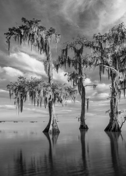 Lake Maurepas swamp black and white photography prints