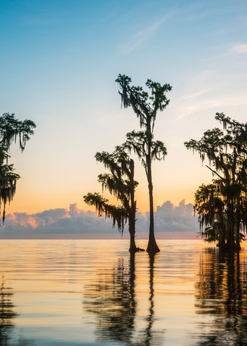 Lake Maurepas sunrise pano - Louisiana swamp photography prints