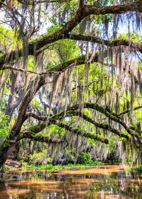 Bayou cathedral Louisiana swamp photography prints