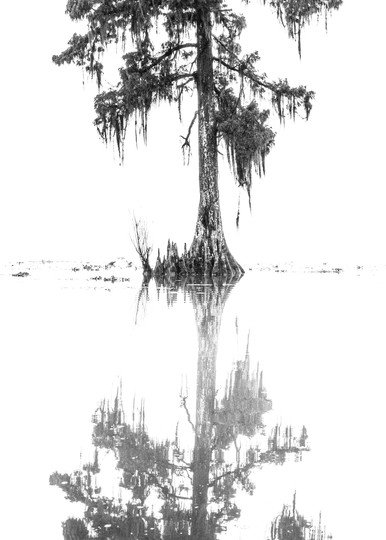 The upside down swamp photography print