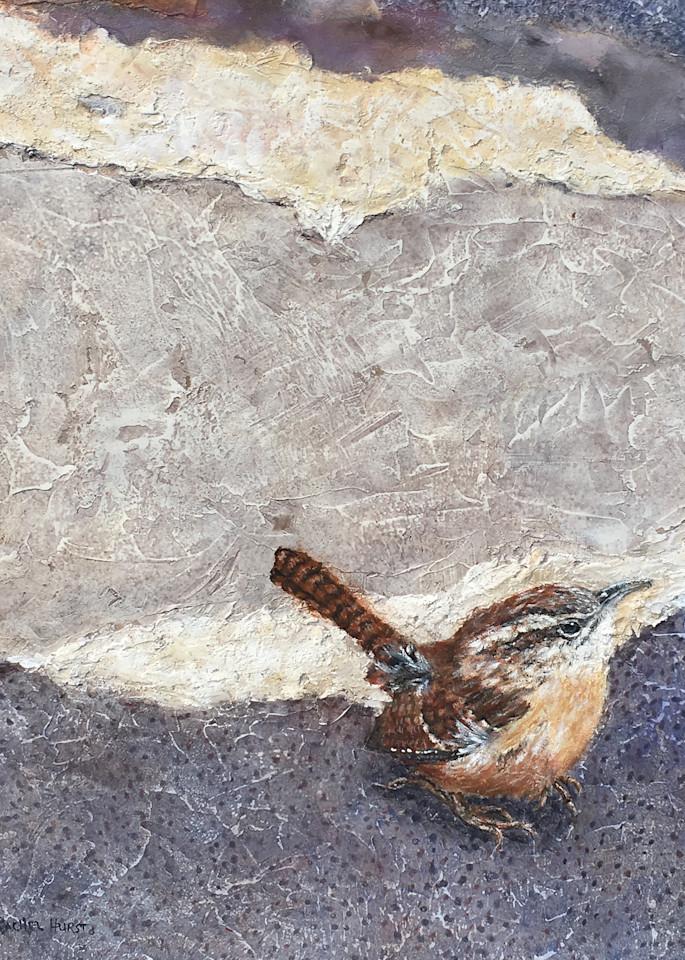 Fox Island Wren