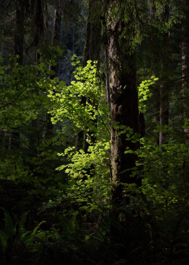 Isolated Sunlight Photography Art | Leiken Photography