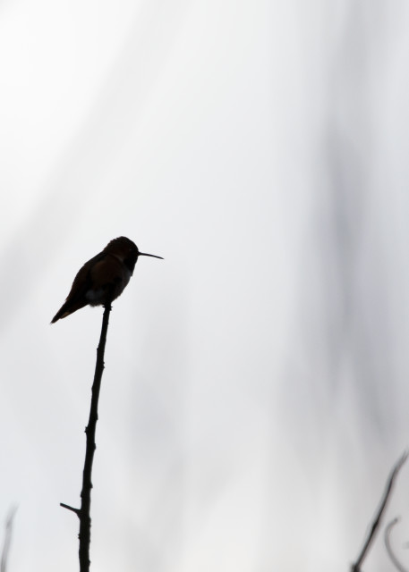 Hummingbird Silhouette Photography Art | Leiken Photography