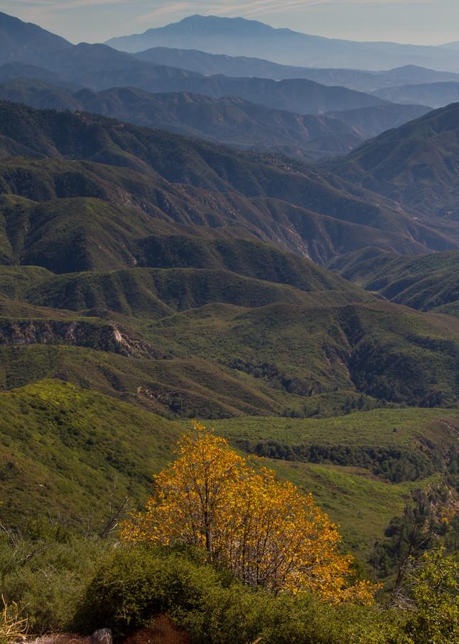 Tree To Mountains Photography Art | Leiken Photography