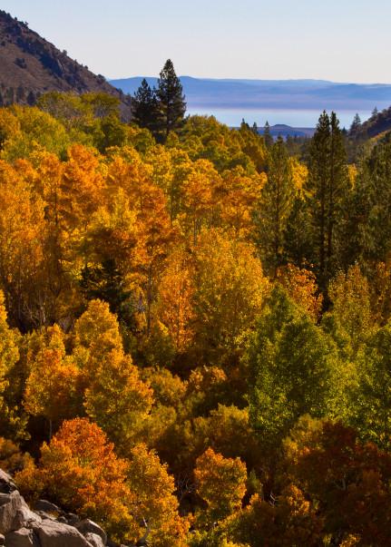 Fall At Mono Photography Art | Leiken Photography