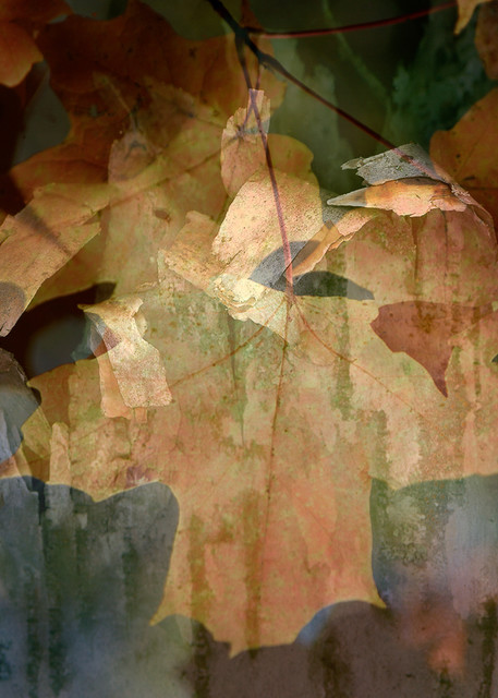 Abstract Leaf Photo Print